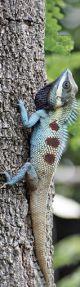 Tasseled Bookmark Blue Lizard